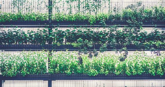 Toiture végétalisée - Mur végétal