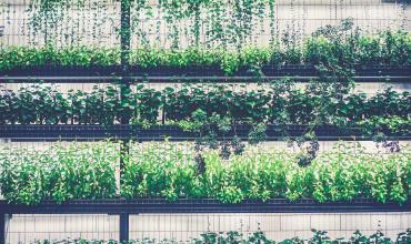 Toiture végétalisée et mur végétal