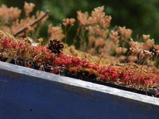 toit mur végétal toulon st tropez brignoles