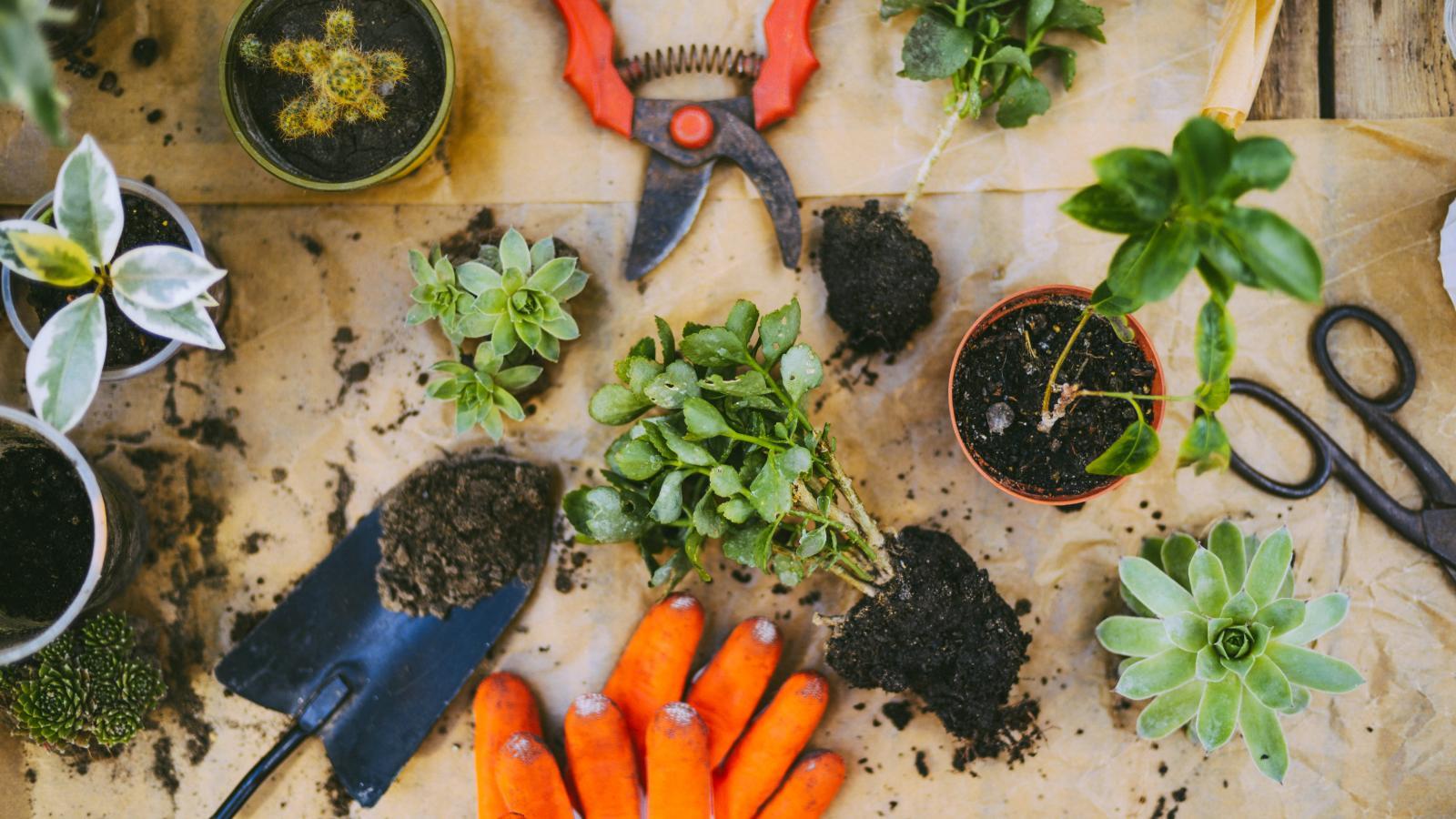 Blog conseils : l'œil du paysagiste