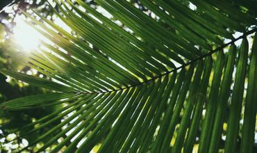 Transplantation de palmier à Saint Tropez