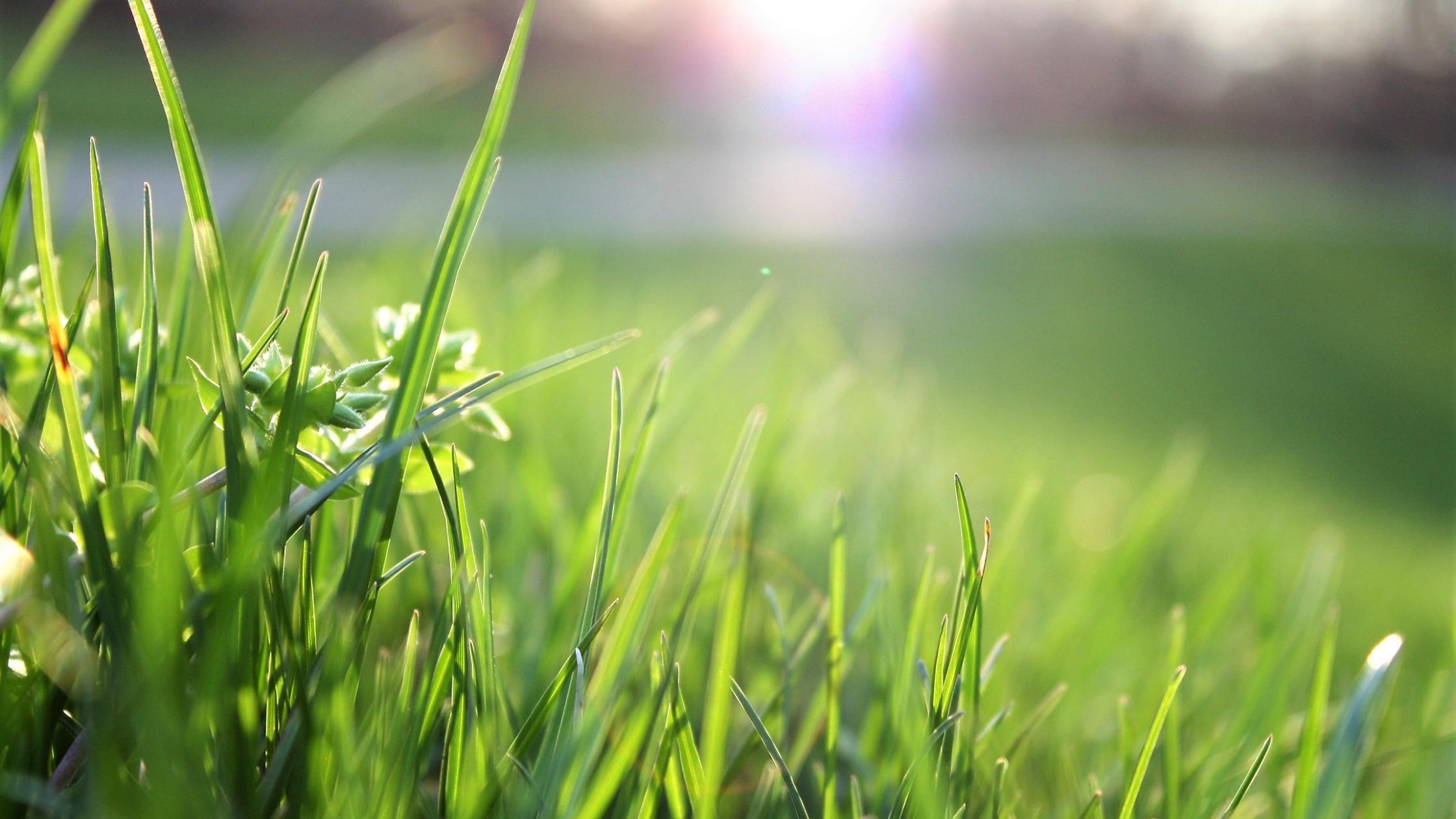 Installer et planter un gazon vert dans son jardin - Aménagement paysager - Création de jardin - Cade Paysage